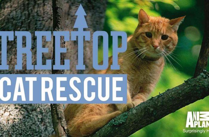 Treetop Cat Rescue